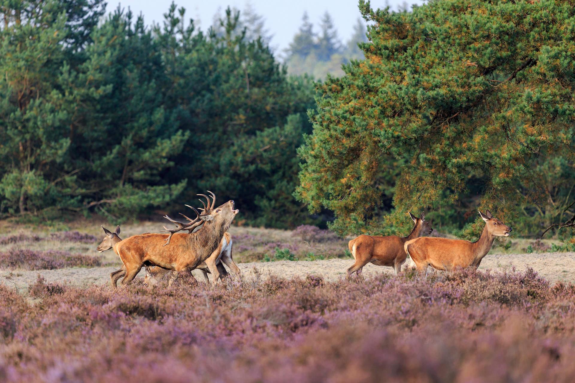 Het Nationale Park De Hoge Veluwe maakt nieuwe maatregelen bekend