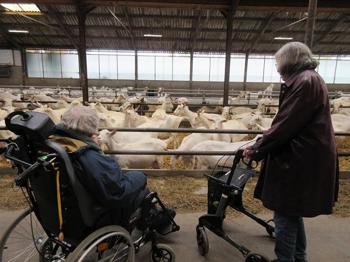Bewoners op bezoek bij geitjes in Warnsveld