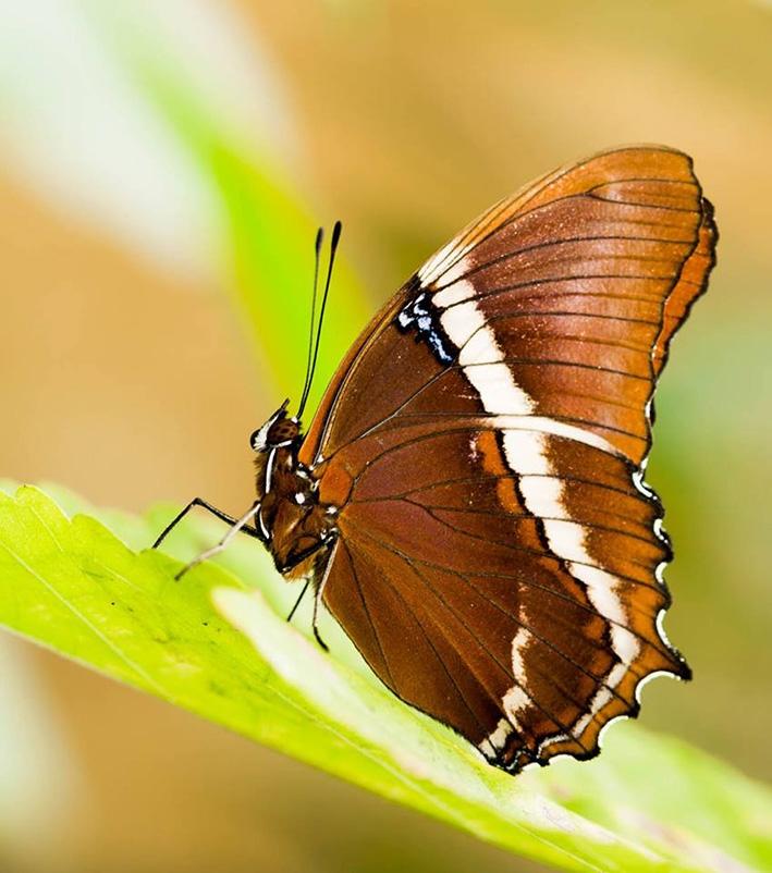 Tropische vlinders in alle kleuren te bewonderen