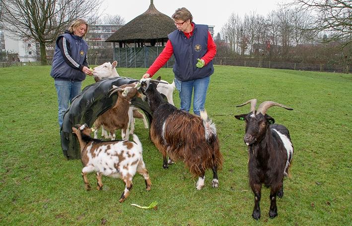 Kinderboerderij vecht voor haar bestaan