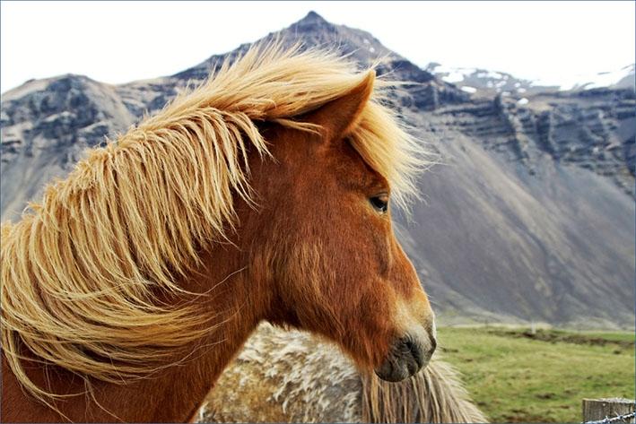 Paardensport op hoog niveau
