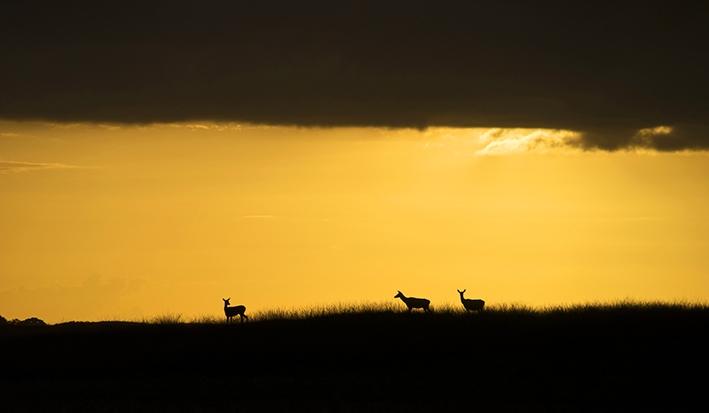 Open NK Natuurfotografie