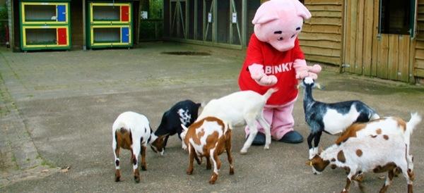 Nu geen dierentuinvergunning Kinderparadijs Malkenschoten