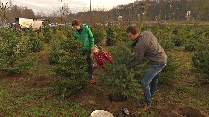 Kerstbomen krijgen een tweede leven in klimaatbos