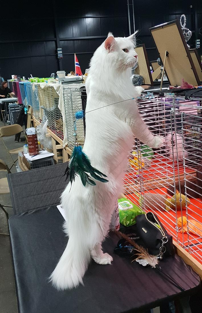 Mundikat Halloweenshow met meer dan 400 katten