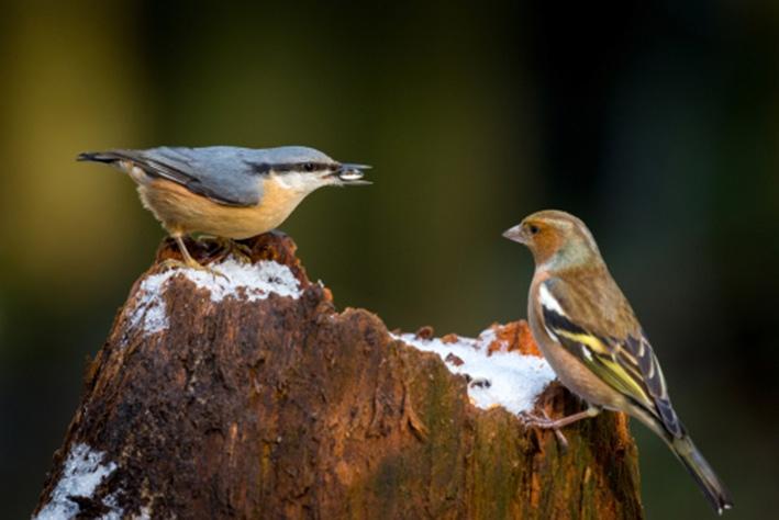 'Fotografen storen de vogels'
