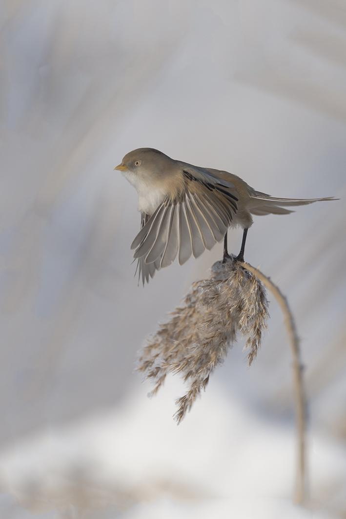 Natuur in vogelvlucht