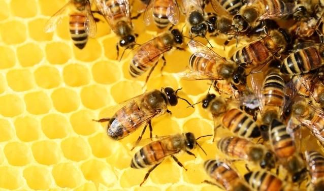 Wereld Bijendag; laat bijen weer dansen!