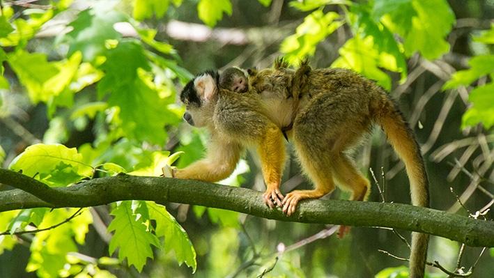 Bos vol apenbaby's verwacht
