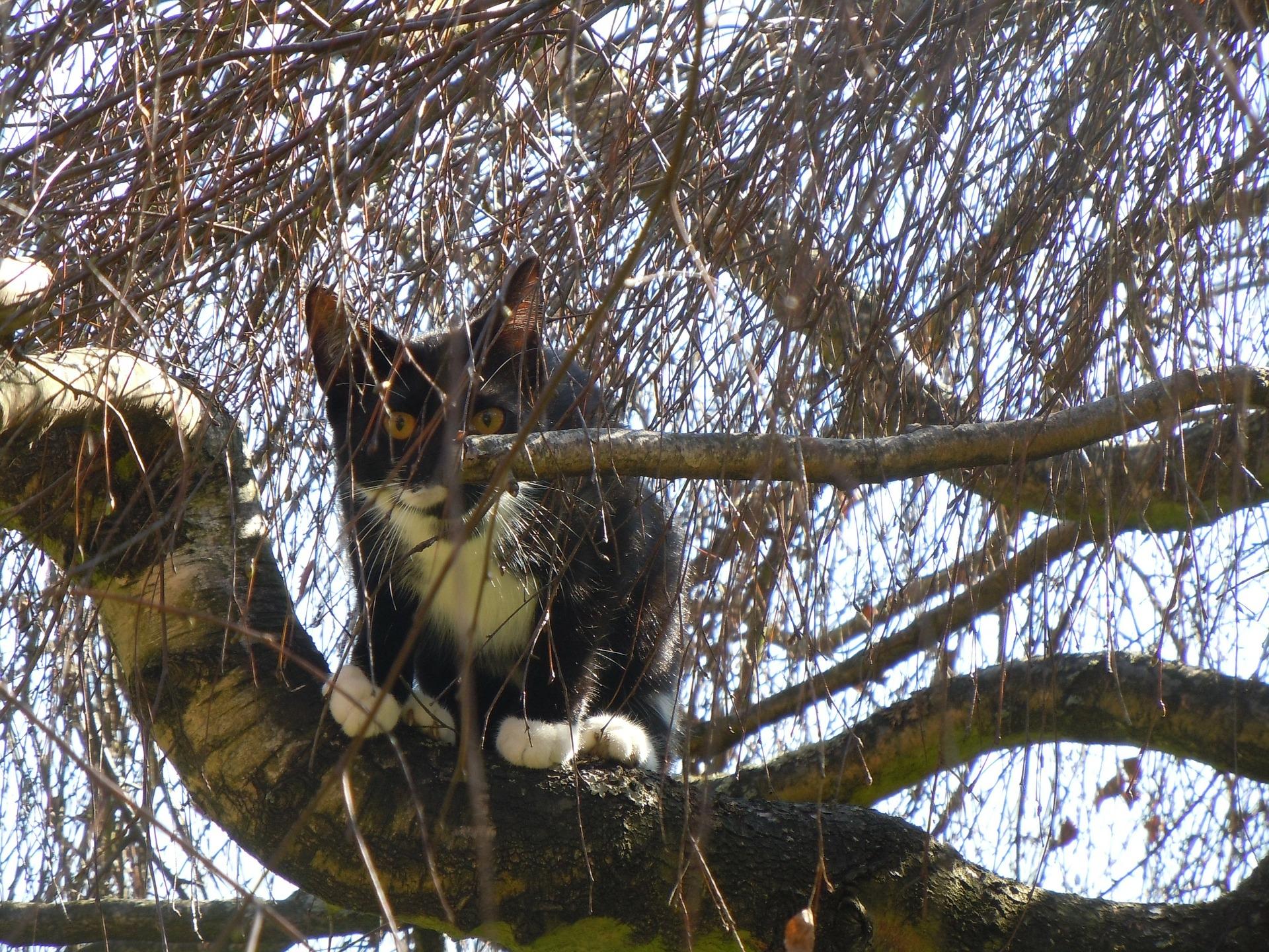 Kat in boom; brandweer schiet te hulp