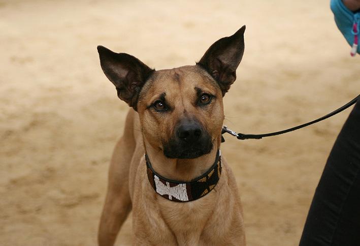 Rasloze hondendag bij AKC