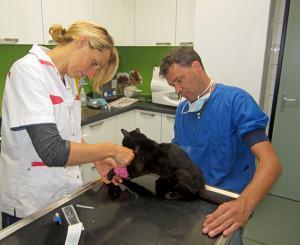 Pilot Minimax dierendokter ook van kracht in Deventer