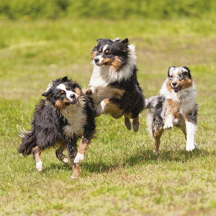 Aanpassing hondenlosloopgebieduiterwaarden De Worp