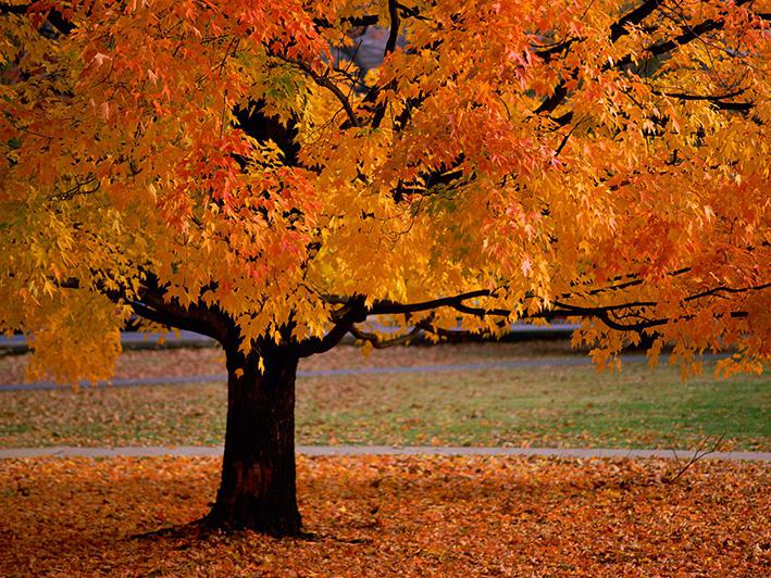 Verkiezing mooiste herfstboom