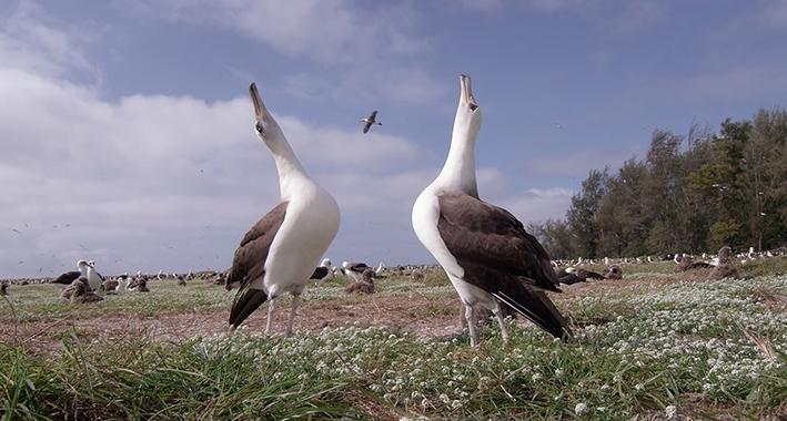Bijzondere zeevogels en plastic soep
