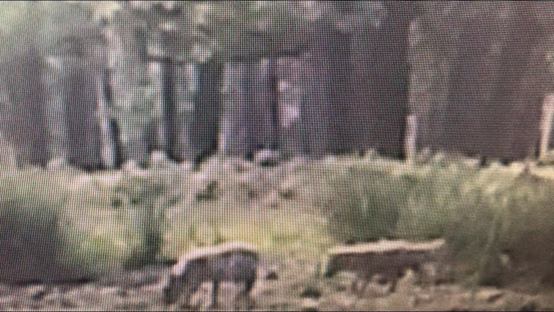 Filmbeelden bevestigen het: er zijn jonge wolven op de Veluwe