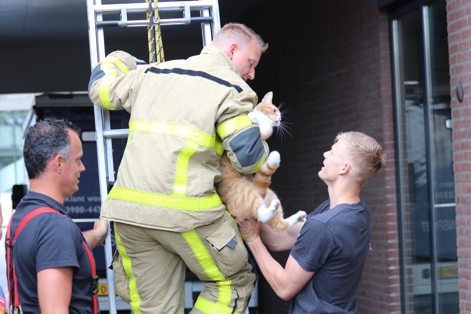 Brandweer helpt kat weer veilig naar beneden