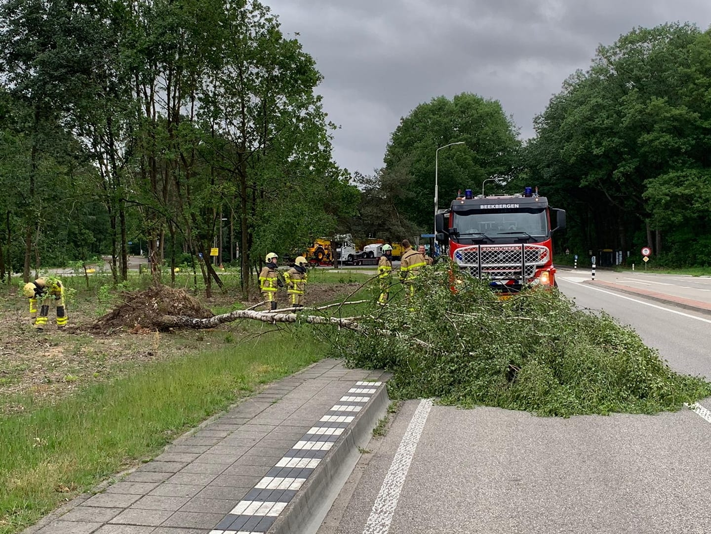 Bushalte geblokkeerd door omgevallen boom