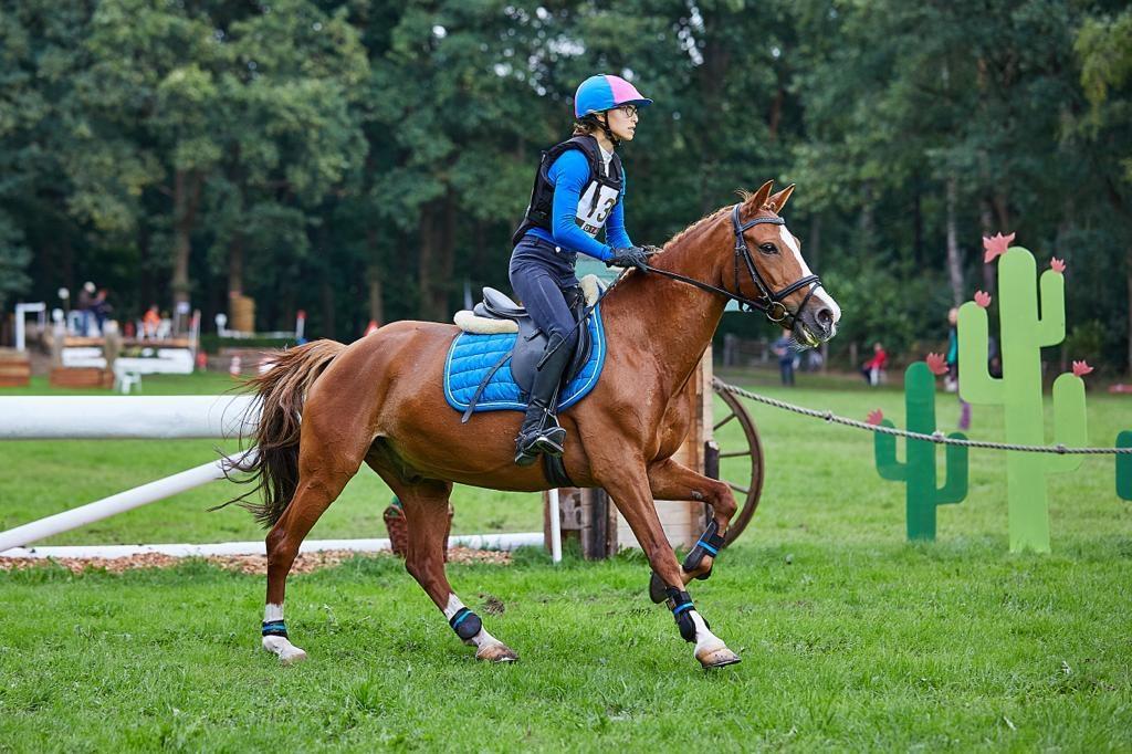 Beste pony's van Nederland in Gorssel