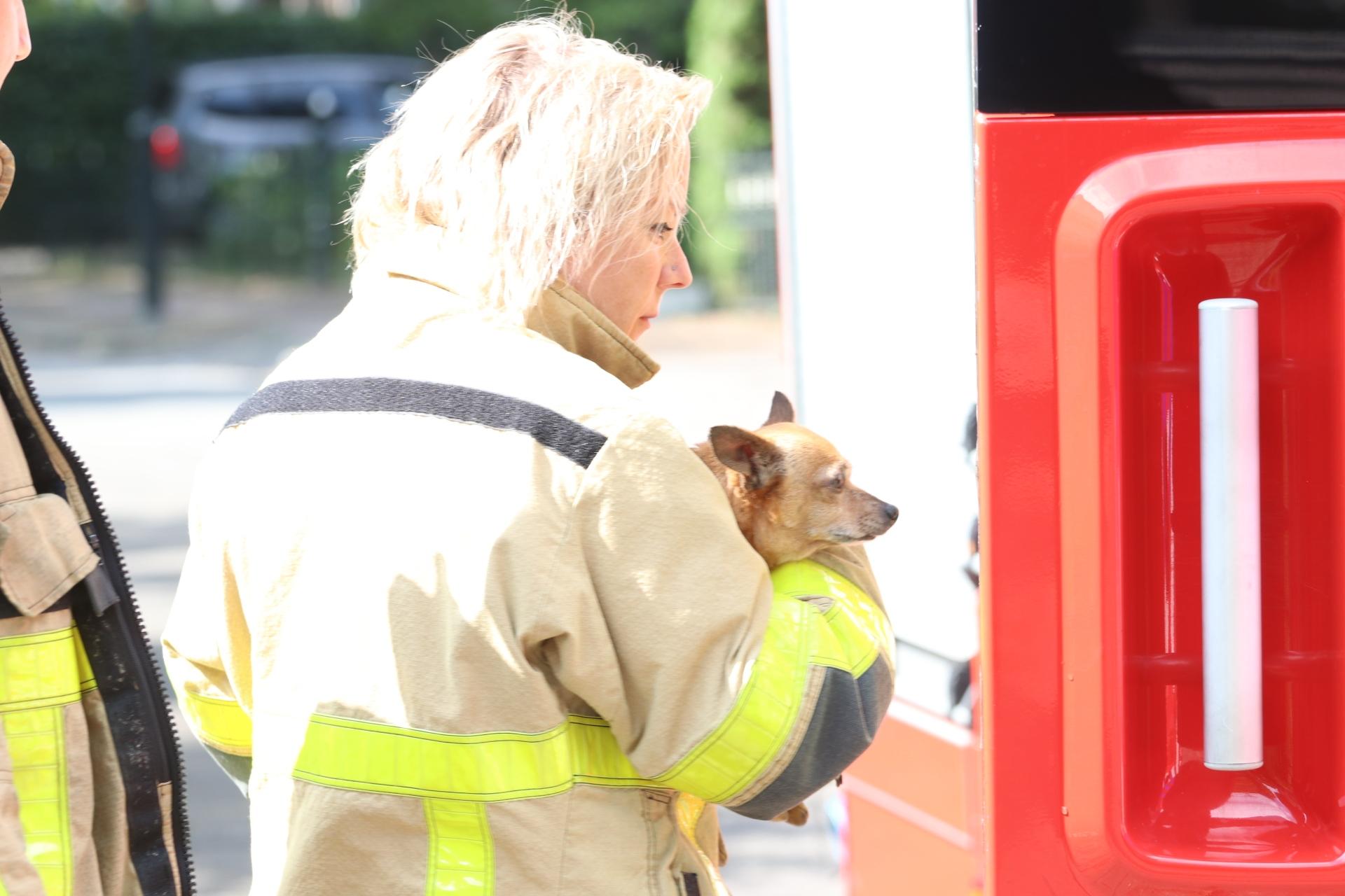 Hondje vast in afvoerputje; brandweer in actie