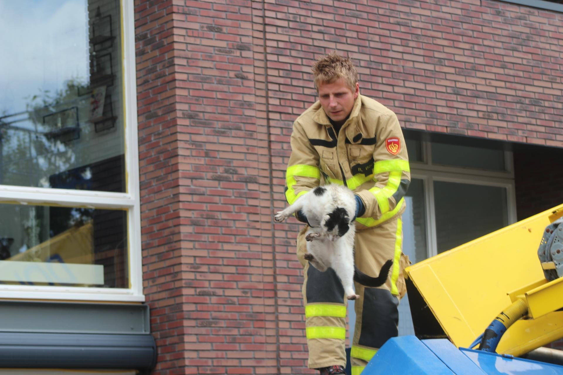Kat vast in hoogwerker; brandweer in actie