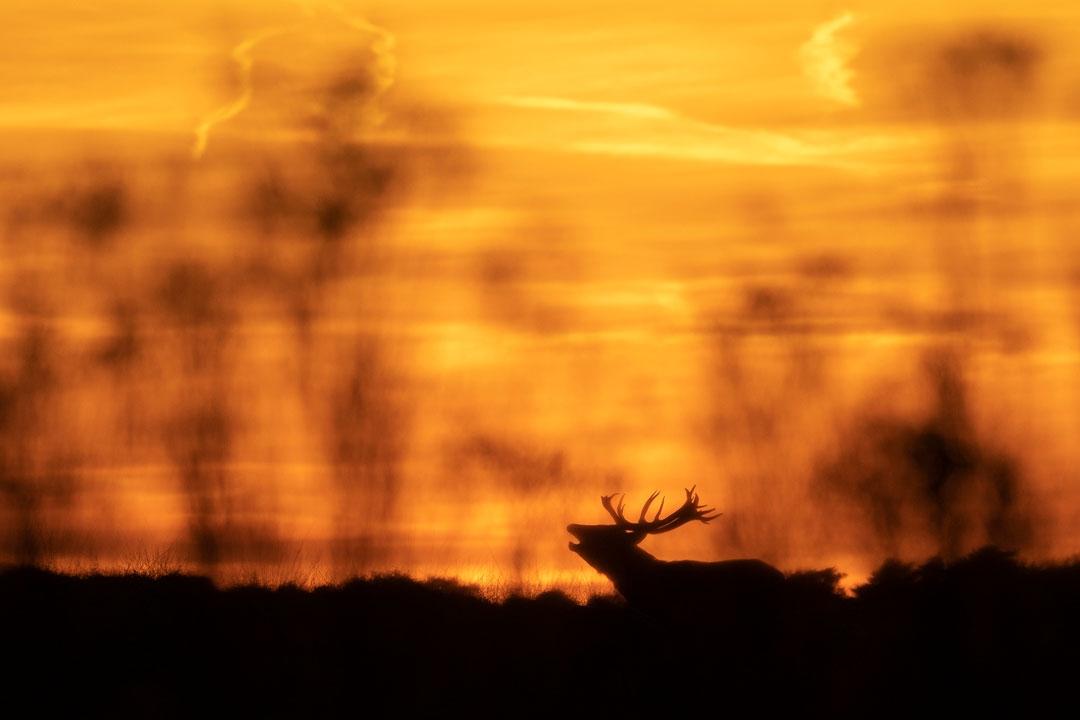 Natuur als inspiratie Veluwse Fotodag 2019