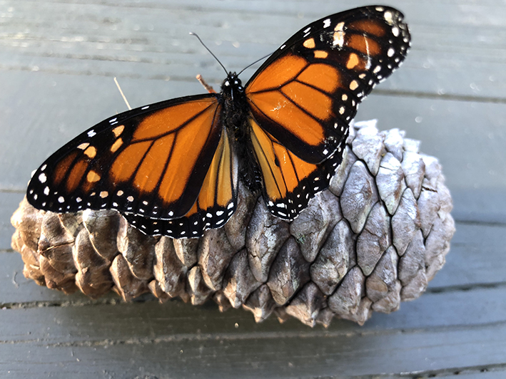 'Vlinders vaak gekoppeld aan herinnering en gevoel'
