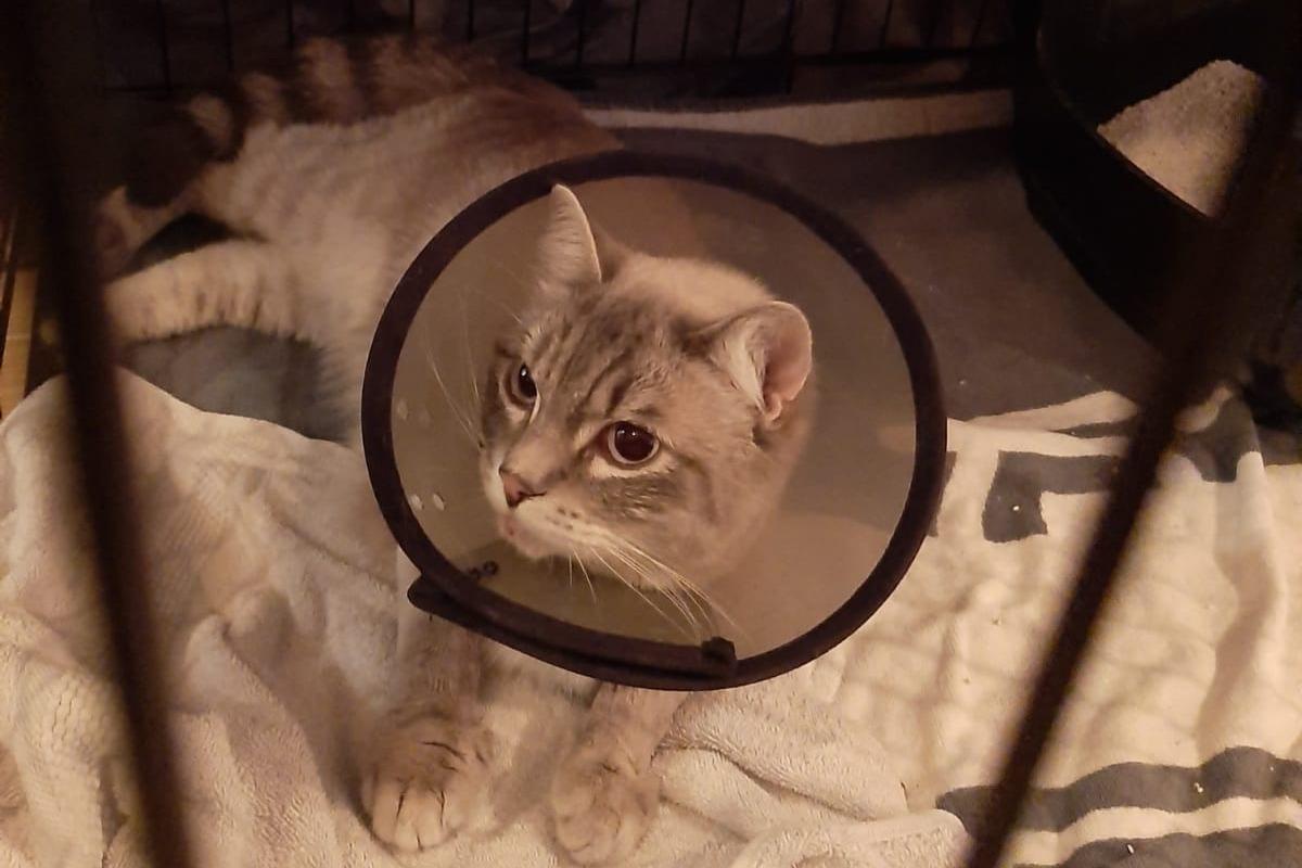 Oproep aan inwoners Apeldoorn om kat Kapitein uit de lappenmand te helpen