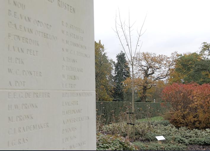Wilhelminaboom geplant op erebegraafplaats in Londen