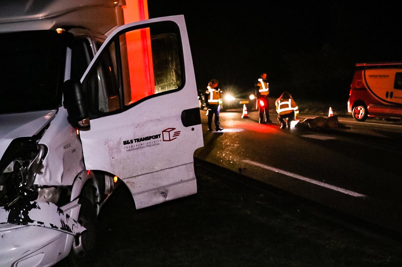 Hert overleden na botsing met vrachtwagentje in Uddel; Bestuurder gewond.