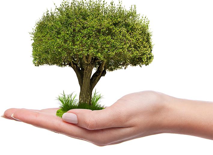 Plant een boompje waar u zelf wilt