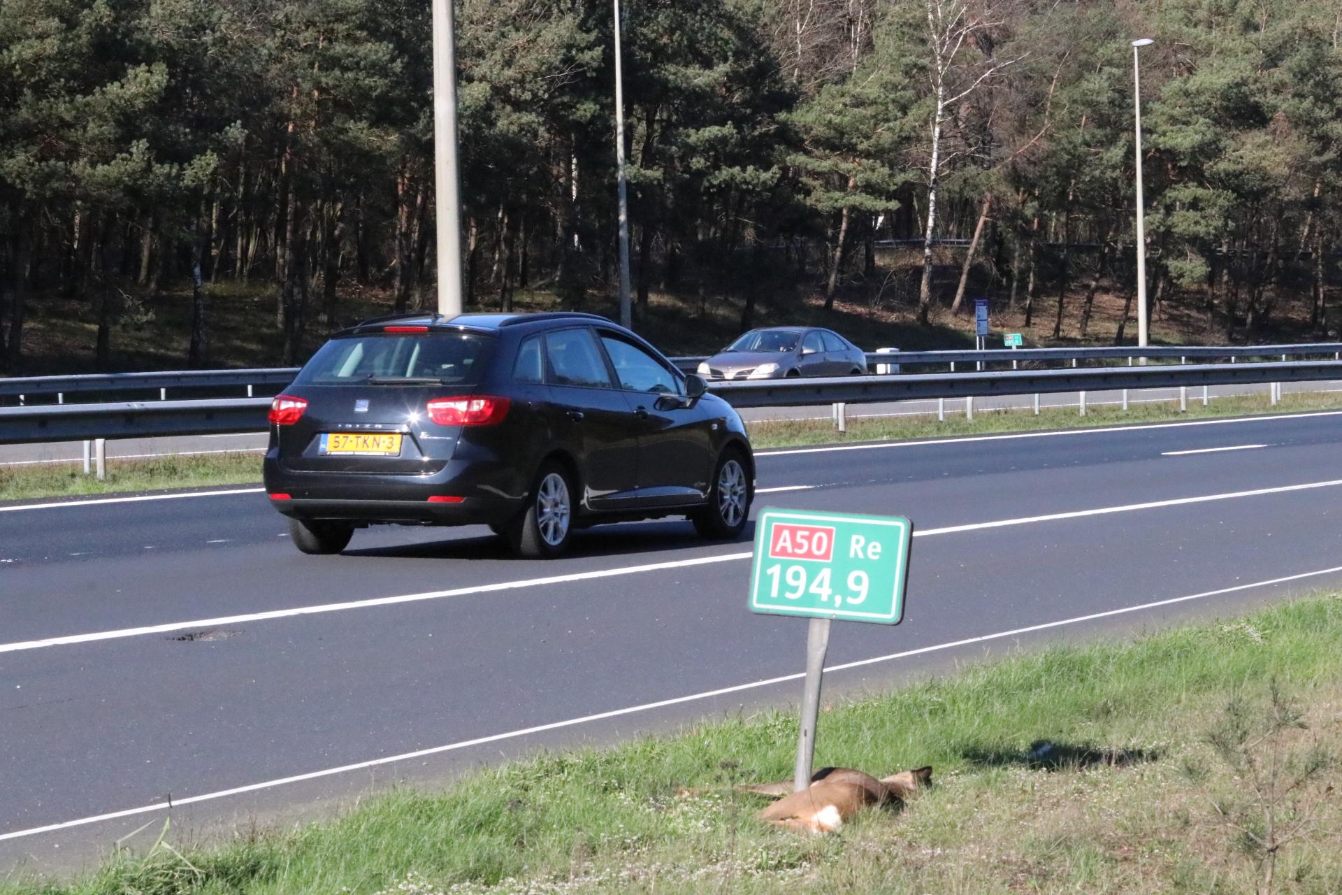 Hert overleeft aanrijding op A50 niet