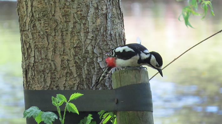 Spechten-excursie de 'jonge vogelaars'