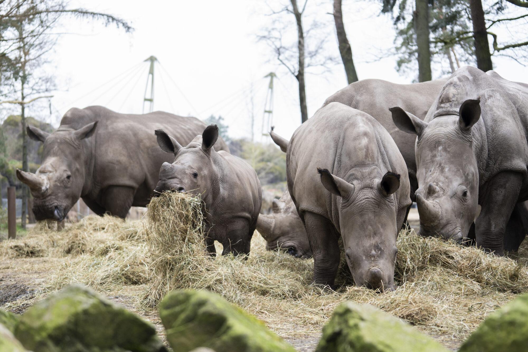 Burger's Zoo brengt dieren met pasen thuis