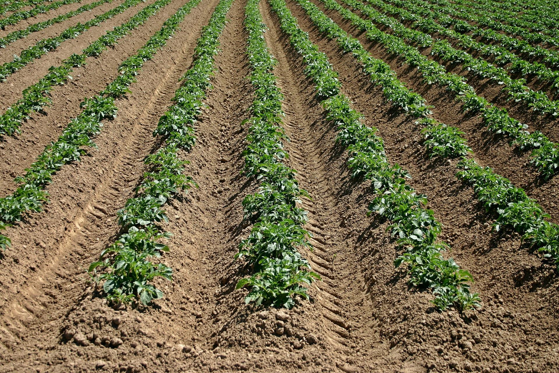 Noodmaatregelen kabinet zeer welkom voor zwaarst getroffen boeren en tuinders