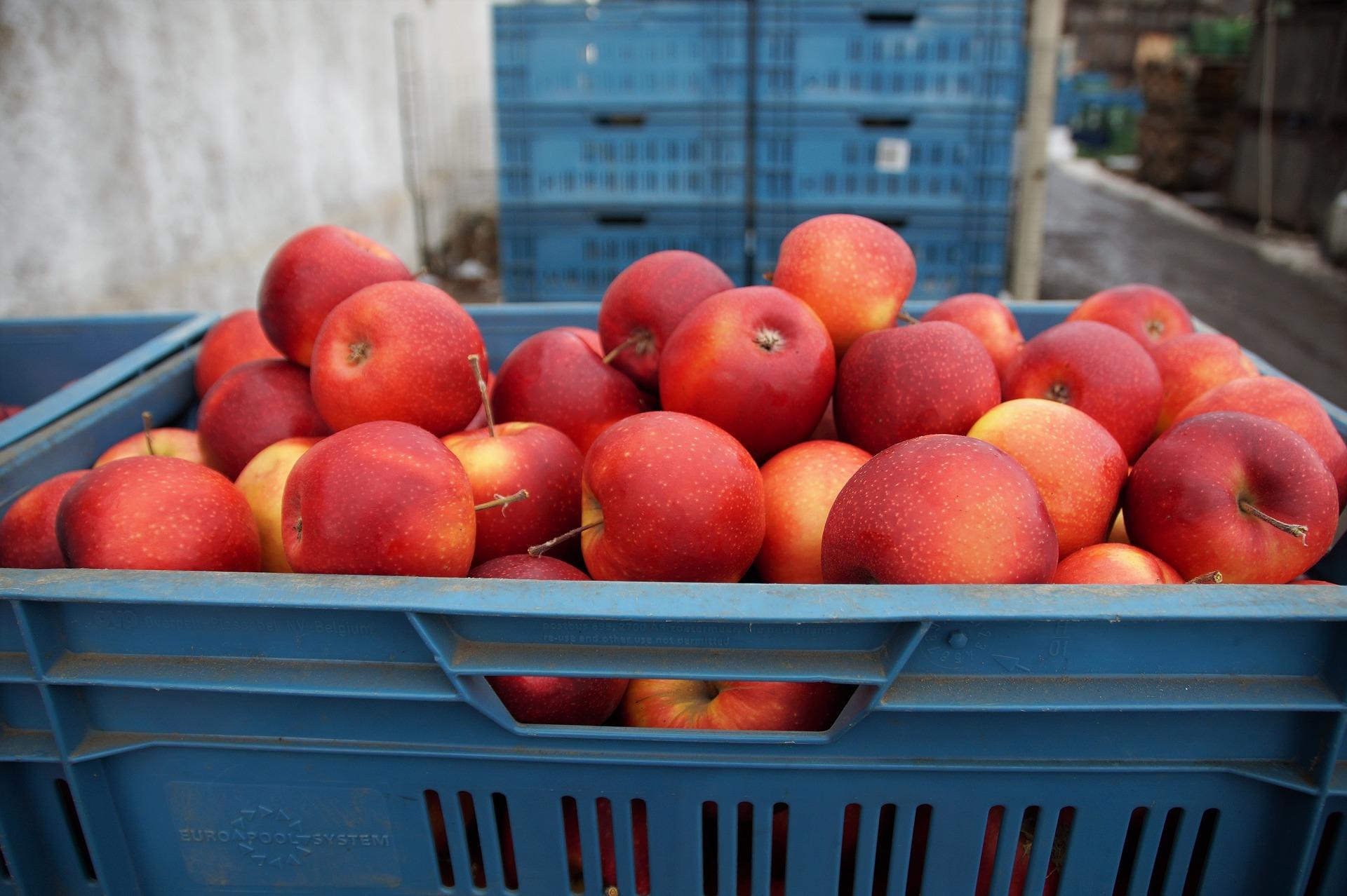 Voedselbanken Nederland ontvangt forse donatie van Jumbo Supermarkten
