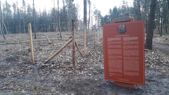 Klimaatbestendig bos op De Hoge Veluwe