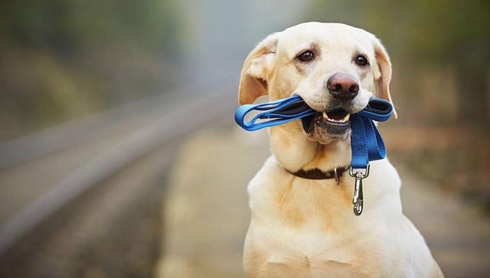 Praatje, belletje, hond