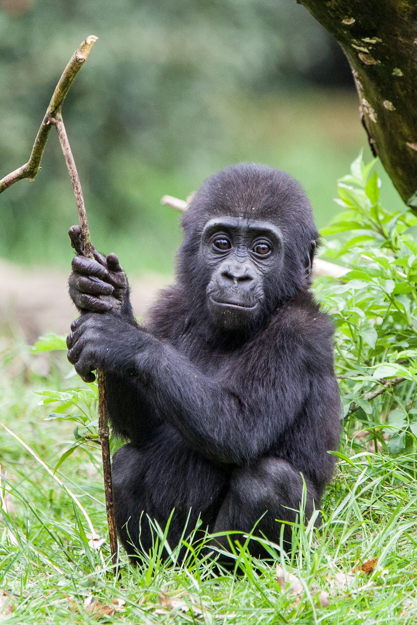 Vriendjes worden met de apen