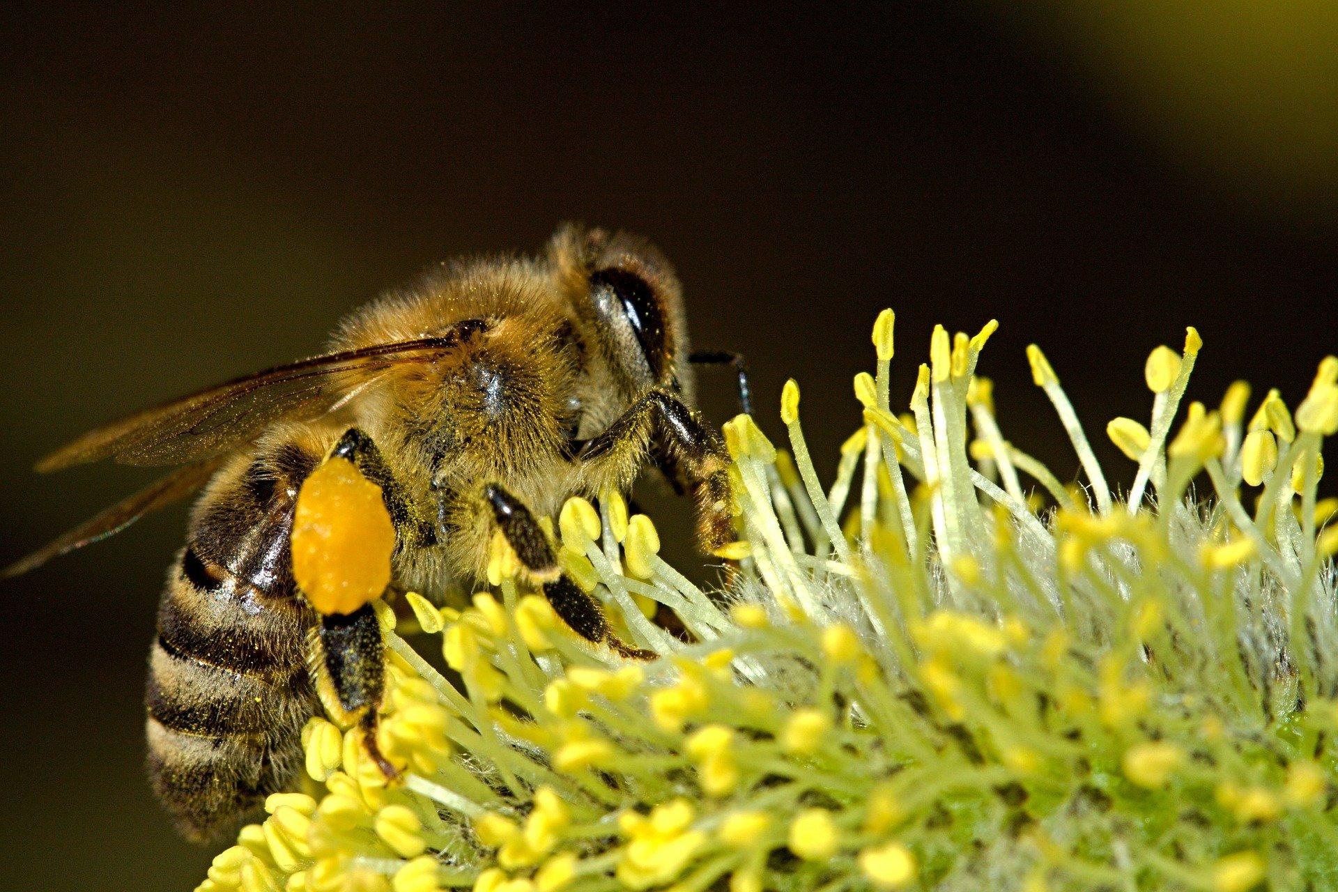 Nederlandse Bijenhoudersvereniging investeert op World Bee Day in biodiversiteit