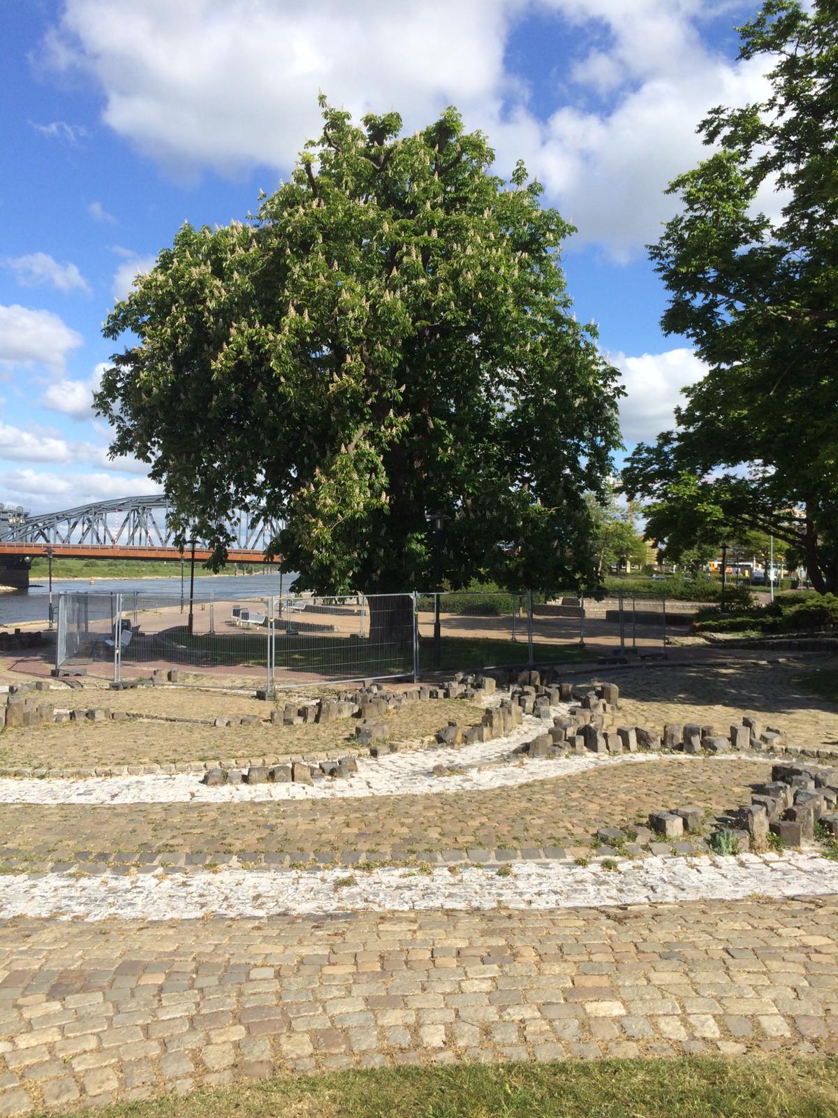 Noodkap voor oude kastanjeboom op IJsselkade