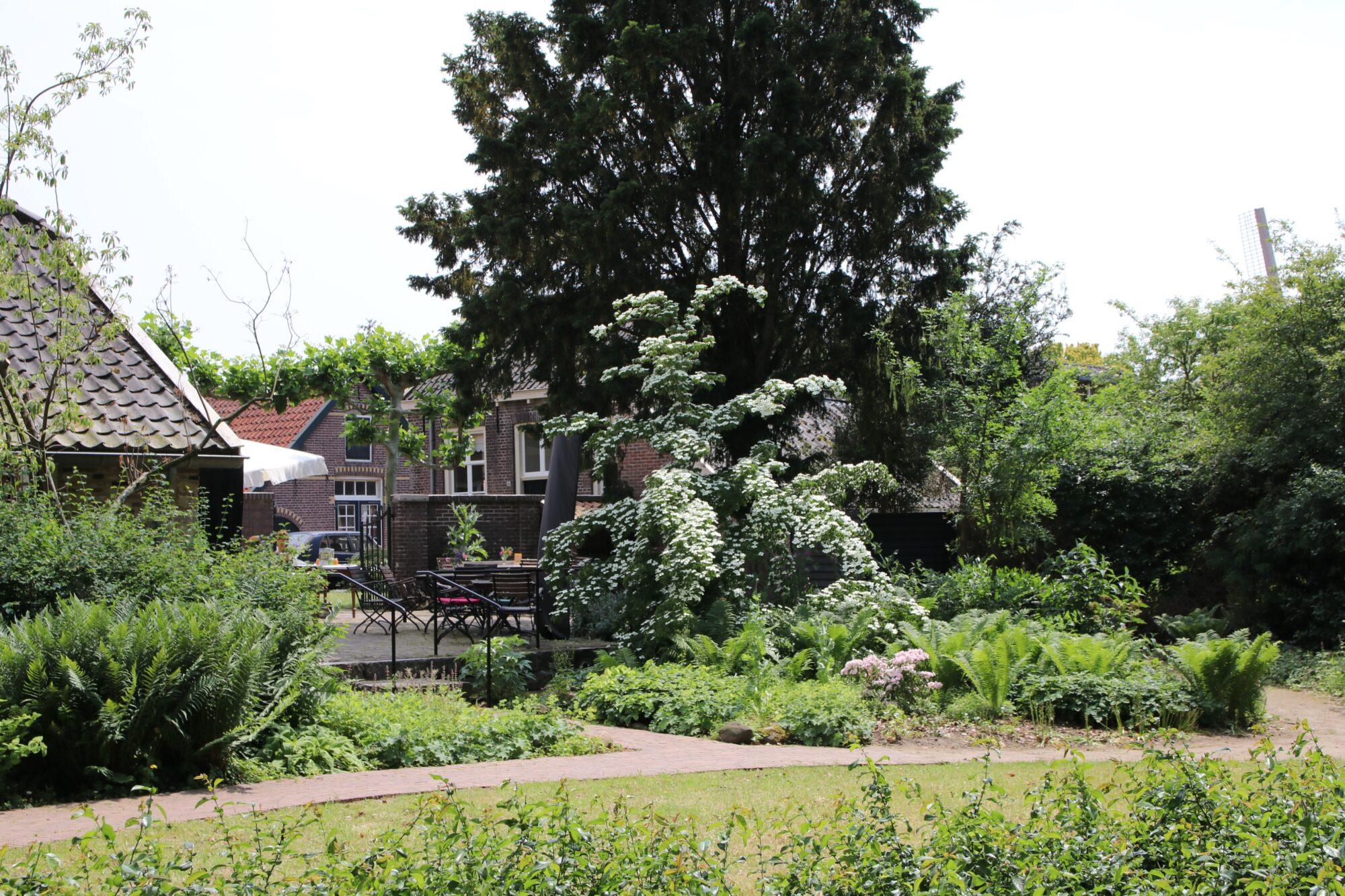 Stinzenplanten in tuin èn galerie
