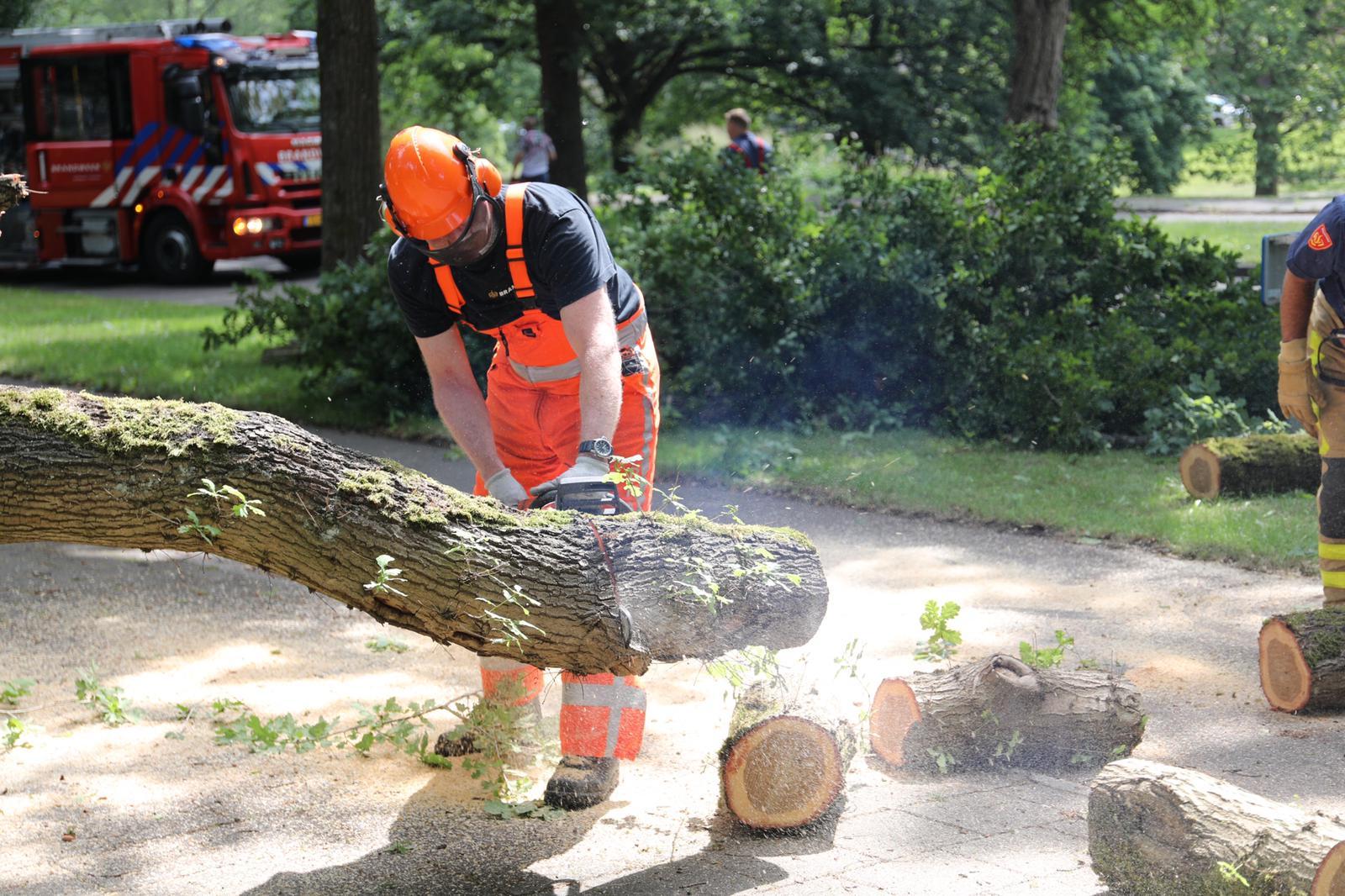 Apeldoornse brandweer haalt omgevallen boom op John F. Kennedylaan weg