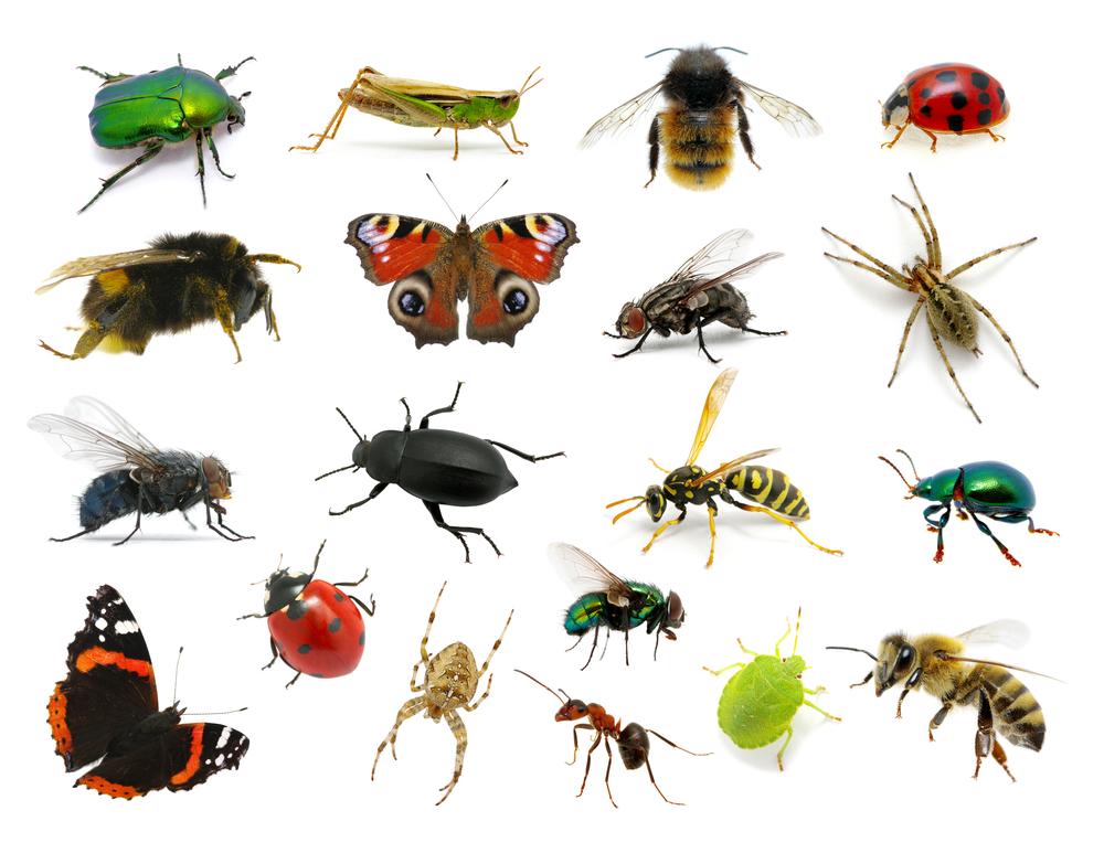 Deventer bioloog: 'Zonder insecten is een leven op aarde niet mogelijk'