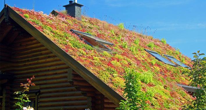 Extra groene daken in Deventer