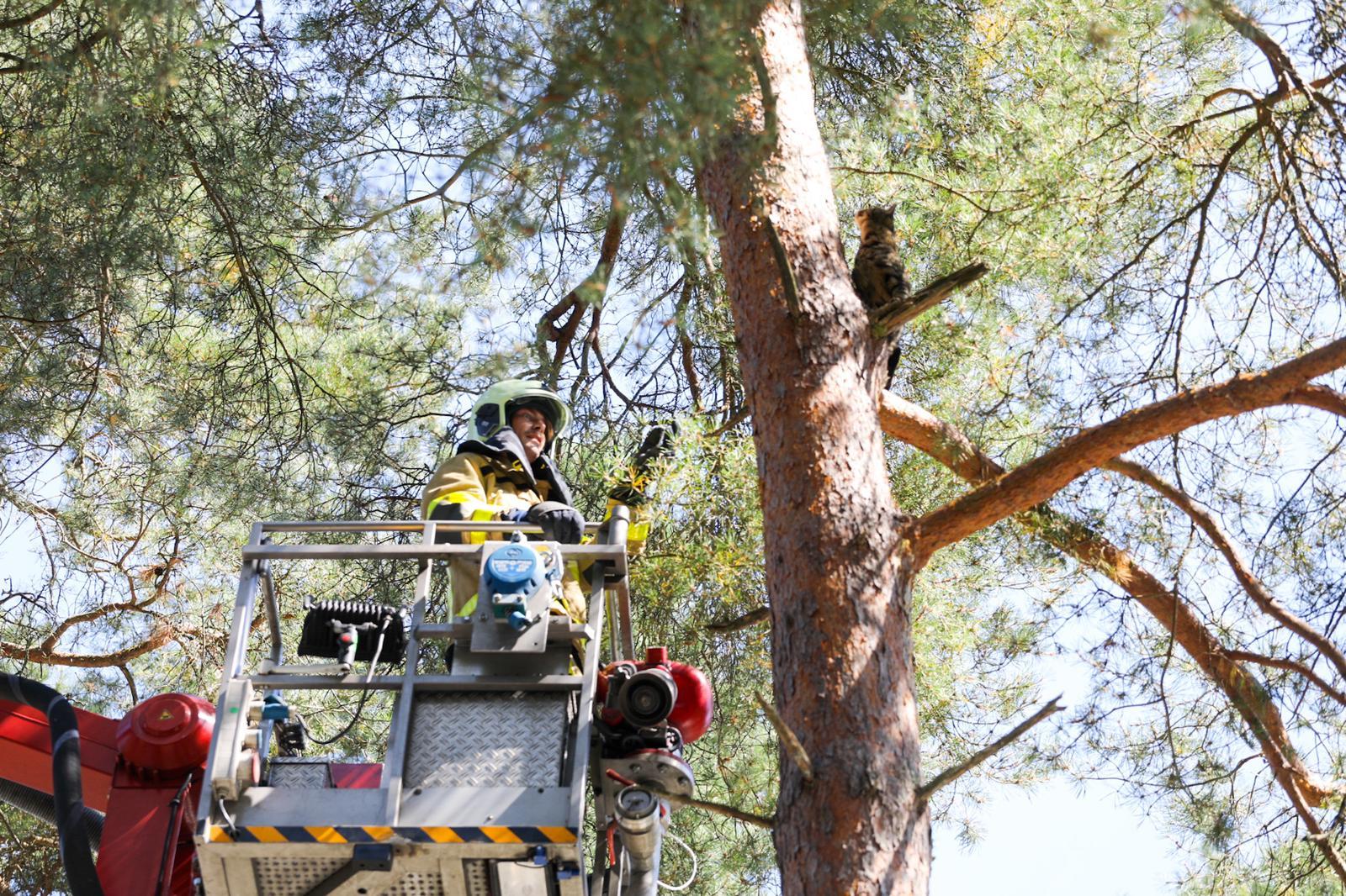 Geen goed nieuws voor eigenaar van ontsnapte kat; brandweer krijgt viervoeter niet uit de boom