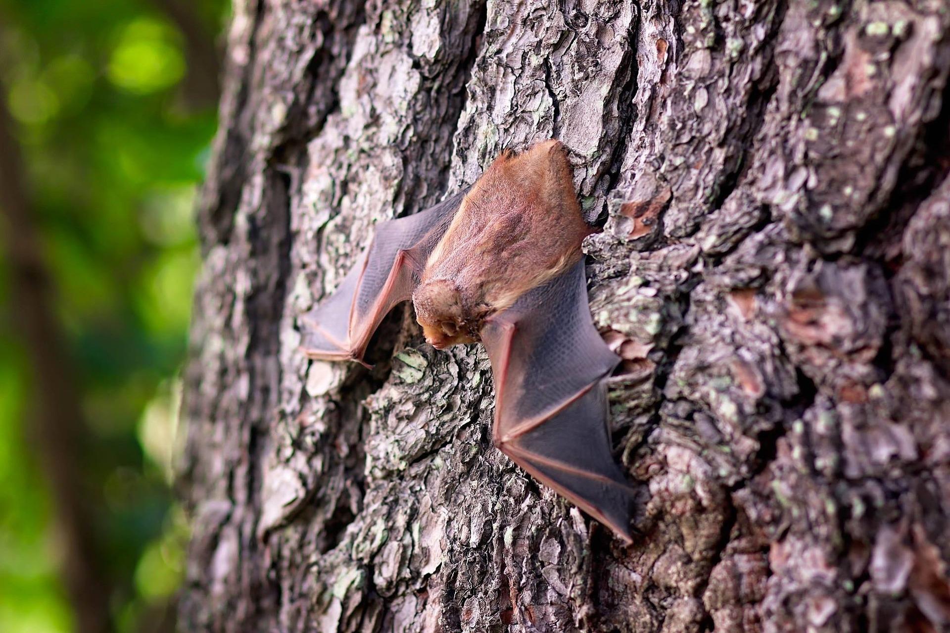 Zomertip: Vleermuizen spotten in Almen