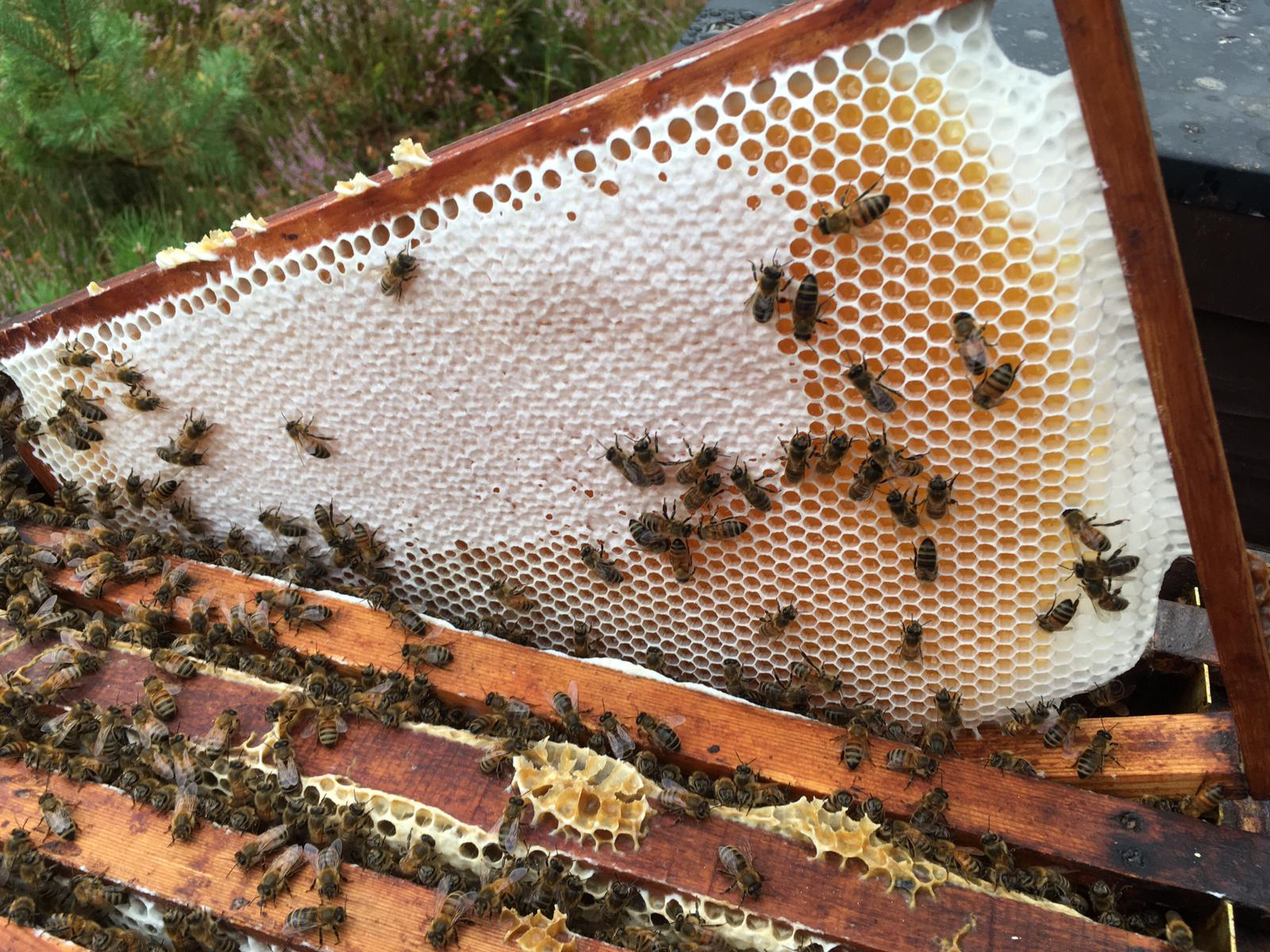 54e editie Honingmarkt in Ugchelen
