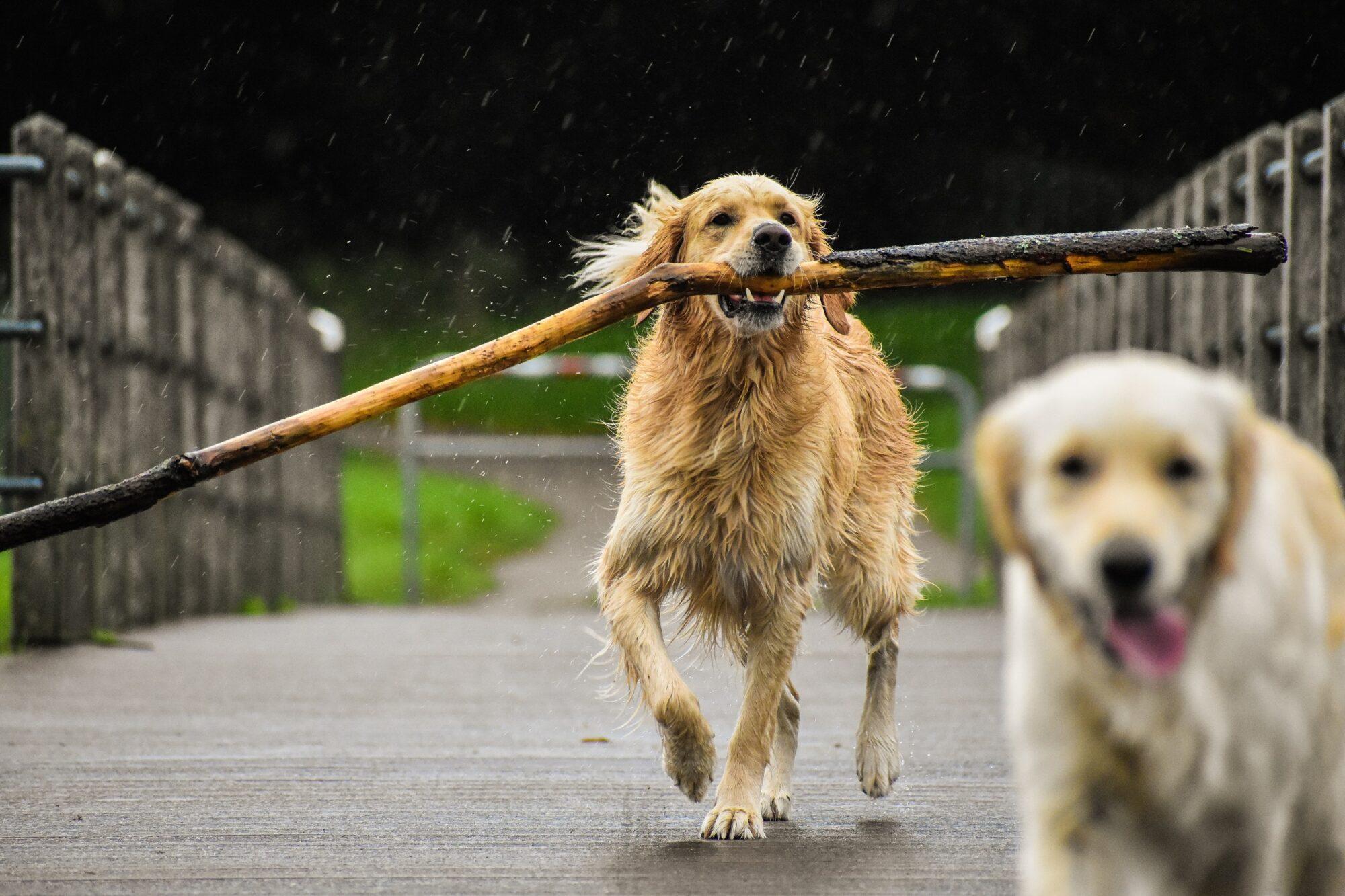Feestelijke start van hondenseizoen bij recreatiegebied Busslo