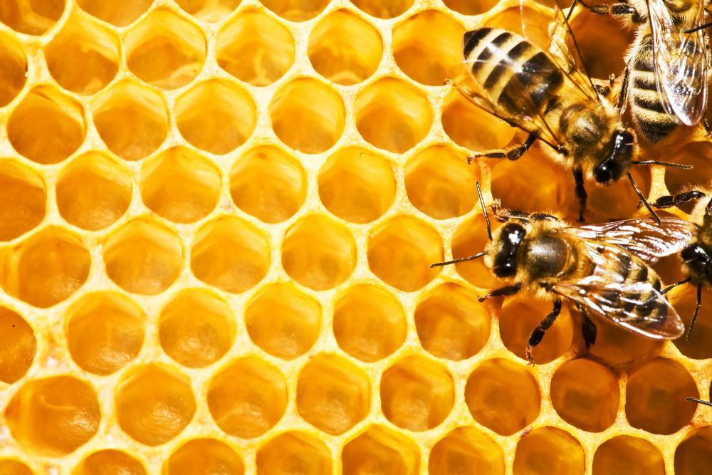 Honing te kust en te keur